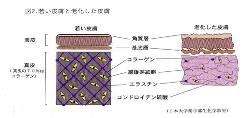 紫外線(3)